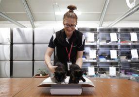 City of Ballarat Employee at Animal Shelter weighing a cat